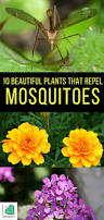 10 beautiful plants that repel mosquitoes i love herbalism