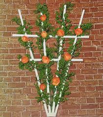 Trellis For Climbers Garden Design Garden Design With Trellis Plants On Pinterest