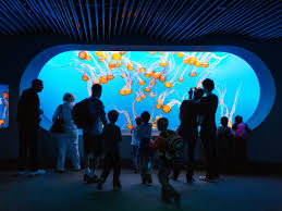 monterey bay aquarium u0027s ecological renaissance sunset