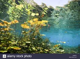 Alaska Vegetaion images Underwater vegetation stock photos underwater vegetation stock jpg