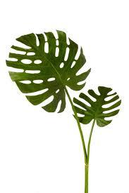 sage u0026 co fleur faux plant monstera leaf bundle u0026 reviews