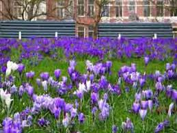 flowers and gardens video popular tourist places satellite map