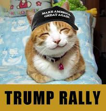 Happy Cat Meme - happy cat make america great again know your meme