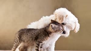 download wallpaper 2560x1440 puppy kitten friends animals
