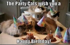 Birthday Meme Cat - best 25 funny happy birthday meme birthday meme funny memes