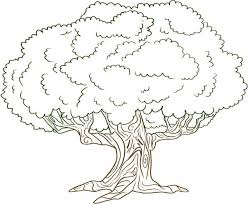 pine tree coloring pages tree coloring pages no leaves places to picture of a out plants