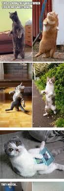 Newspaper Cat Meme - pin by derek newspaper cat on alpacas 365 pinterest cat