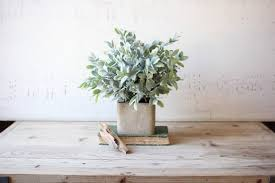 Indoor House Plants Low Light 6 Indoor Plants That Guarantee Positive Energy The Co Reportthe