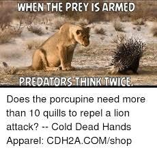 Meme Honey Badger - 25 best memes about porcupine porcupine memes