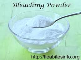 Powder That Kills Bed Bugs Learn How To Kill Bed Bugs With Clorox Bleach Or Bleaching Powder