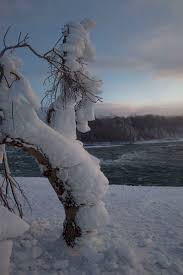 thick layer ice covering tree american