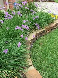 Gardening Zones Texas - society garlic keeps mosquitoes away and looks beautiful too