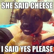 Yes Please Meme - rediculously photogenic dog memes quickmeme