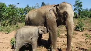 elephant freedom single day