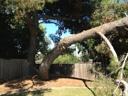 orange county tree service blog archive tree trimming and