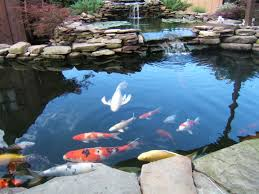 outdoor decor backyard with a large fish pond and then rock newest