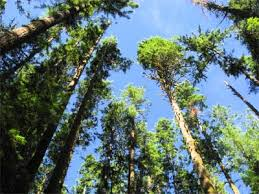 how can a tree grow howstuffworks
