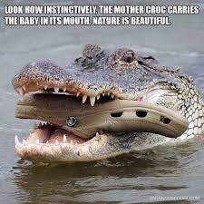 Crocodile Meme - dopl3r com memes look howinstinctively the mother croc carries