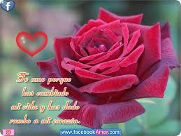 bonitas de rosas rojas con frases de amor imagenes de amor facebook postales de rosa rojas para el amor amor pinterest rosas rojas