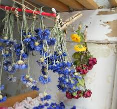 Dry Flowers You Don U0027t Need An Airing Cupboard To Dry Flowers Dried Flower Crafts