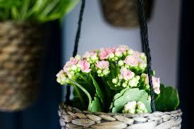 diy indoor hanging planters love u0026 renovations