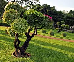 image amenagement jardin decoration idee amenagement maison amenagement jardin idee