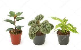 assorted green houseplants in pots ornamental plants stock