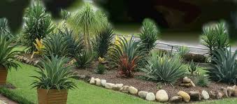 yucca agave plants landscaping garden design ideas succulents