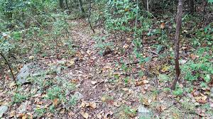 Bow Hunting From Ground Blind Archery Hunting Blinds 5 Mistakes To Avoid In October Big Game