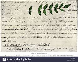 william clark sketch of an evergreen shrub leaf in his diary of