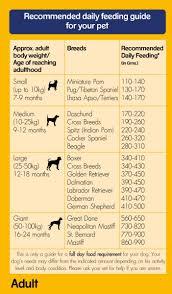 feeding a boxer dog pedigree dog food chicken u0026 vegetables 10 kg dogspot