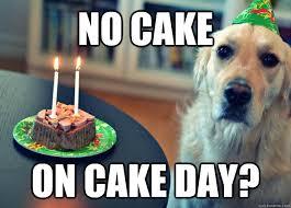 No Cake Meme - no cake on cake day sad birthday dog quickmeme