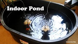 goldfish indoor pond youtube
