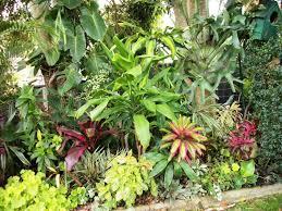 australian native garden plants garden pictures forum happy plant flower