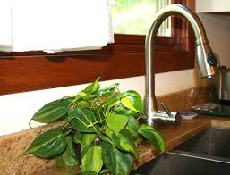 houseplants houseplants make you healthier costa farms