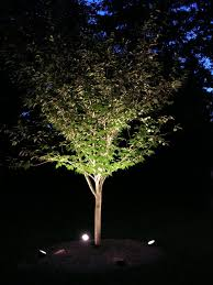 Outdoor Up Lighting For Trees Tree Uplighting Ideas Lighting Design Ideas Pinterest