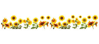 sunflower pictures wallpops sunflowers border wall decal reviews wayfair