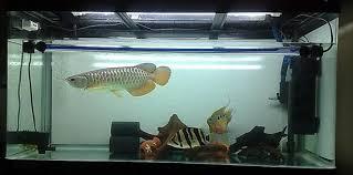 membuat aquascape bening hendhika e saputra filter yang cocok agar air aquarium tetap bersih