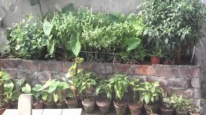bamboo big roof bamboo roof for climbing vines gardening updates gardening tips urdu hindi