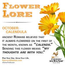 artistic florist of tampa bay home facebook