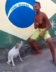 Dancing Dog Meme - homeless pooch busts out some moves as he twerks alongside his new