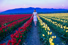 young woman in colorful tulip fields at sunset tulip festival