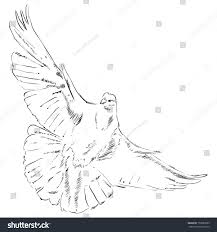 flying dove drawing made by hand stock vector 159853583 shutterstock