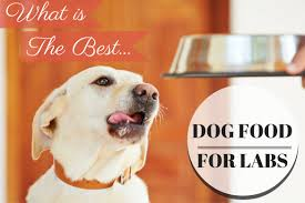the best dog food for labs