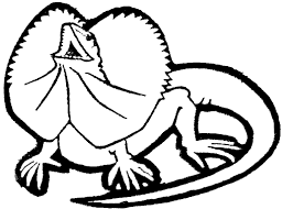 lizard coloring page free download