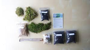 zen moss terrarium diy for large terrariums live nc moss