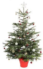 christmas tree prices real christmas tree prices fishwolfeboro