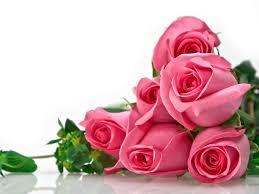 Beautiful Flowers Flowers For Flower Lovers Flowers Wallpapers Beautiful Roses
