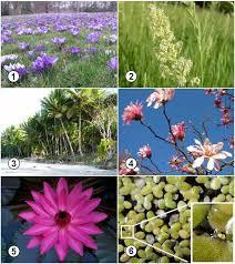 biobook leaf what life cycle have flowering plants