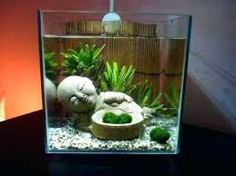 fish tank decoration ideas for goldfish tips to get cool tanks
